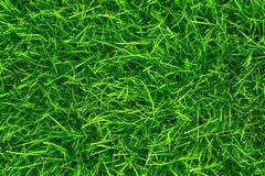Предпосылка зеленой травы близкий свежий зеленый цвет травы вверх Предпосылка для надписей Стоковая Фотография RF