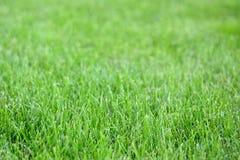 Предпосылка зеленой травы весны воскресенья свежая Стоковые Изображения