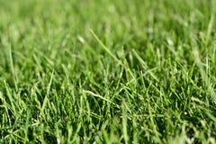 Предпосылка зеленой травы весны воскресенья свежая Стоковые Изображения RF