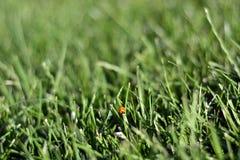 Предпосылка зеленой травы весны воскресенья свежая Стоковая Фотография