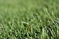 Предпосылка зеленой травы весны воскресенья свежая Стоковое Изображение