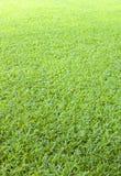 Предпосылка зеленой травы гольфа Стоковая Фотография