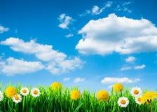 Предпосылка зеленой травы и цветков Стоковая Фотография RF