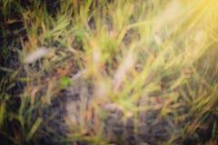 Предпосылка зеленой травы расплывчатая Стоковые Фото