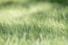 Предпосылка зеленой травы, селективный фокус Стоковые Фото