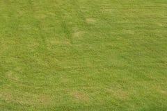 Предпосылка зеленой травы Стоковое Фото