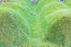 Предпосылка зеленой травы Стоковые Фото