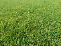 Предпосылка зеленой травы Стоковые Изображения RF