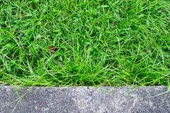 Предпосылка зеленой травы Стоковые Изображения