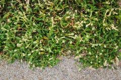 Предпосылка зеленых растений и камня пола Стоковое Изображение