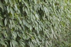 Предпосылка зеленых растений Стоковое фото RF
