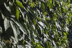 Предпосылка зеленых растений Стоковые Фотографии RF