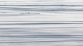 Предпосылка зимы, который замерли утро на озере, который замерли озеро Стоковая Фотография RF