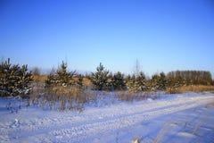 Предпосылка зимы рождества с снегом и деревьями Стоковые Фото