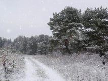 Предпосылка зимы рождества с снегом и деревьями Стоковые Изображения RF