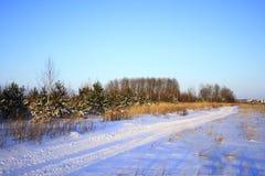 Предпосылка зимы рождества с снегом и деревьями Стоковая Фотография
