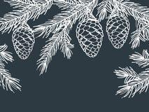 Предпосылка зимы с ветвями сосны с конусами Стоковое Изображение