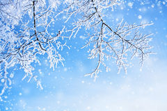 Предпосылка зимы Стоковая Фотография