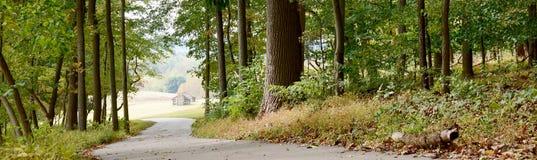 Предпосылка знамени панорамы пути леса стоковое изображение