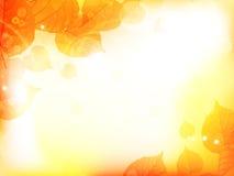 Предпосылка дизайна осени с листьями Стоковая Фотография