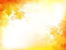 Предпосылка дизайна осени с листьями Стоковые Фото
