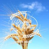Предпосылка дизайна шипов ушей пшеницы Стоковые Изображения RF