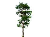 Предпосылка изолированная деревом Стоковые Фото
