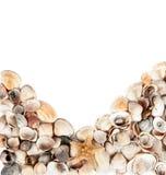 Предпосылка изолированных seashells Стоковое фото RF