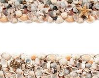 Предпосылка изолированных seashells Стоковые Фотографии RF