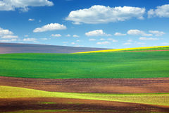 Предпосылка изумительных абстрактных красочных полей Стоковое фото RF