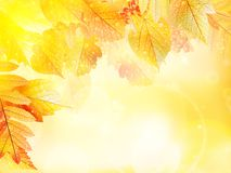 Предпосылка листвы осени Стоковые Изображения RF