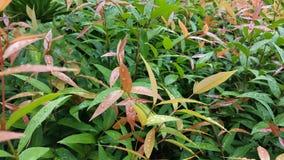 Предпосылка листвы, ремень Tiane Стоковое фото RF