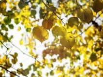 Предпосылка листьев осени в золоте и зеленом цвете Стоковые Изображения