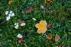 Предпосылка листьев осени листьев осени в парке на земле, желтый цвет, зеленый цвет выходит в парк осени Стоковая Фотография RF