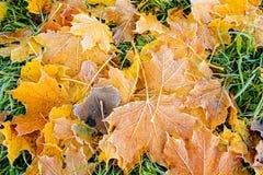 Предпосылка листьев осени листьев осени в парке на земле, желтый цвет, зеленый цвет выходит в парк осени Стоковое фото RF