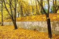 Предпосылка листьев осени листьев осени в парке на земле, желтый цвет, зеленый цвет выходит в парк осени Стоковая Фотография