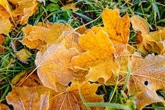 Предпосылка листьев осени листьев осени в парке на земле, желтый цвет, зеленый цвет выходит в парк осени Стоковые Фото