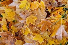 Предпосылка листьев осени листьев осени в парке на земле, желтый цвет, зеленый цвет выходит в парк осени Стоковое Изображение
