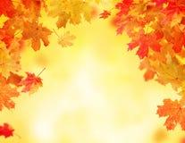 Предпосылка листьев осени с открытым космосом для текста Стоковая Фотография