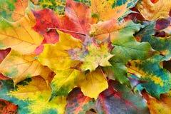 Предпосылка листьев осени Стоковая Фотография RF