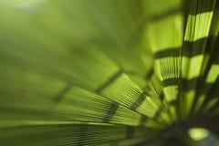 Предпосылка лист ладони Стоковое Изображение RF