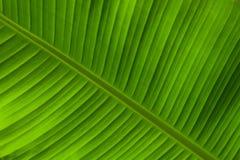 Предпосылка лист ладони стоковая фотография rf