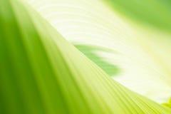 Предпосылка лист банана Стоковая Фотография