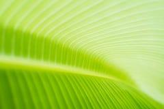 Предпосылка лист банана Стоковые Изображения RF