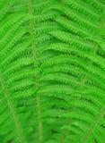 Предпосылка лист папоротника Стоковое фото RF