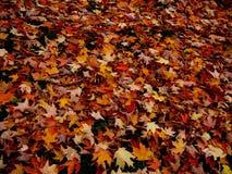 Предпосылка лист падения Стоковое Фото