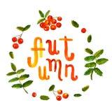 Предпосылка и карточка акварели ягоды рябины нарисованные рукой с рукописной осенью отправляют СМС вектор Стоковые Фотографии RF
