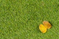 Предпосылка и текстурированный, листья желтого цвета Стоковое Фото