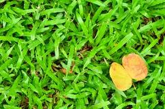 Предпосылка и текстурированный, листья желтого цвета Стоковая Фотография RF