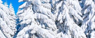 Предпосылка каникул зимы при сосны покрытые сильным снегопадом Стоковое Изображение